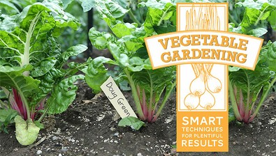 Vegetable Gardening: Smart Techniques for Plentiful Results course image