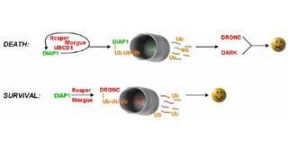 Experimental Molecular Biology: Biotechnology II course image