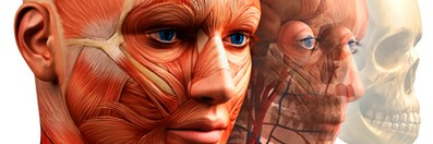 Human Anatomy and Physiology course image