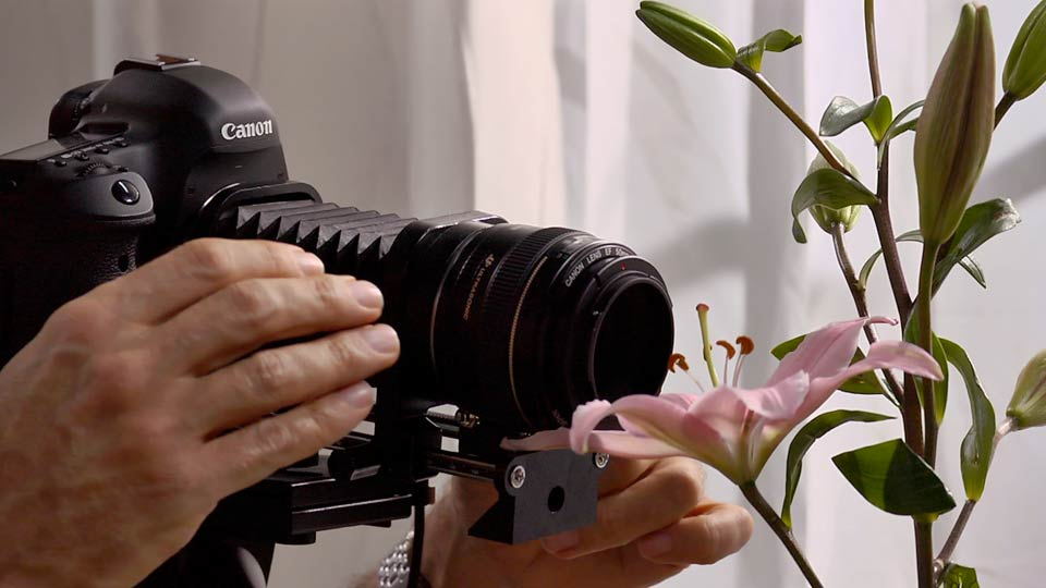 Foundations of Photography: Macro and Close-Up course image