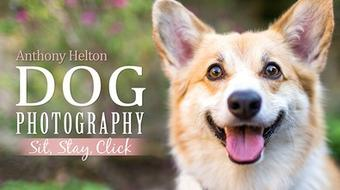 Dog Photography: Sit, Stay, Click course image