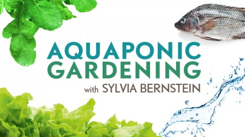 Aquaponic Gardening: Growing Fish and Vegetables Together course image