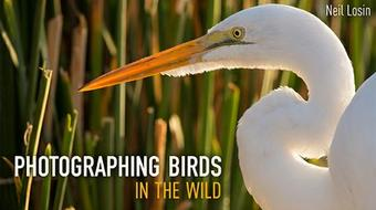 Photographing Birds in the Wild course image
