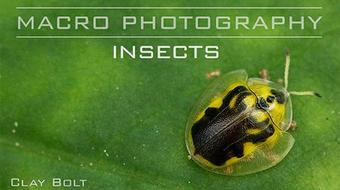 Macro Photography: Insects course image