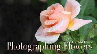 Photographing Flowers course image