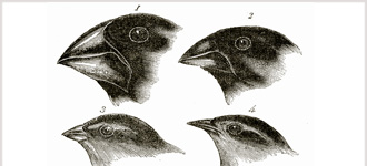 Theory of Evolution: A History of Controversy - CD, digital audio course course image