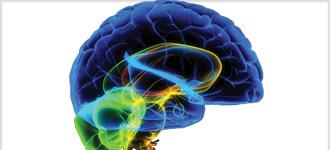 Understanding the Brain - DVD, digital video course course image