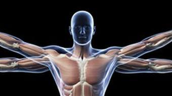 Human Anatomy and Physiology II course image