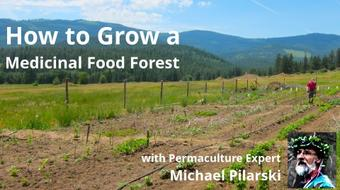 How to Grow a Medicinal Food Forest course image
