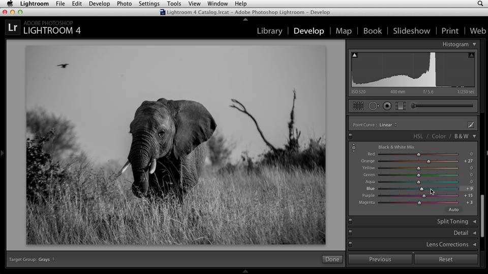 Black and White with Lightroom and Photoshop course image