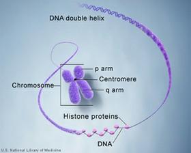 Genetics course image