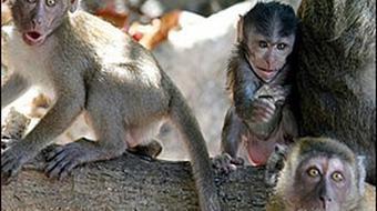 Animal Behavior course image