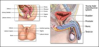 Human Reproductive Biology course image