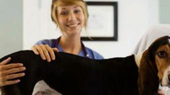 Become a Veterinary Assistant course image
