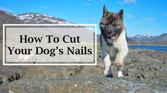 Canine Masterclass: How To Cut Your Dog's Nails, Importance of Exercise & Overheating Aid course image