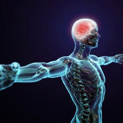 Introduction to the Human Nervous System course image