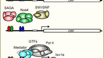 Computational Functional Genomics course image
