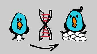 Animal Breeding and Genetics course image