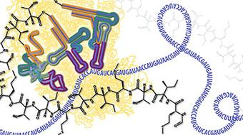 Molecular Biology – Part 3: RNA Processing and Translation course image