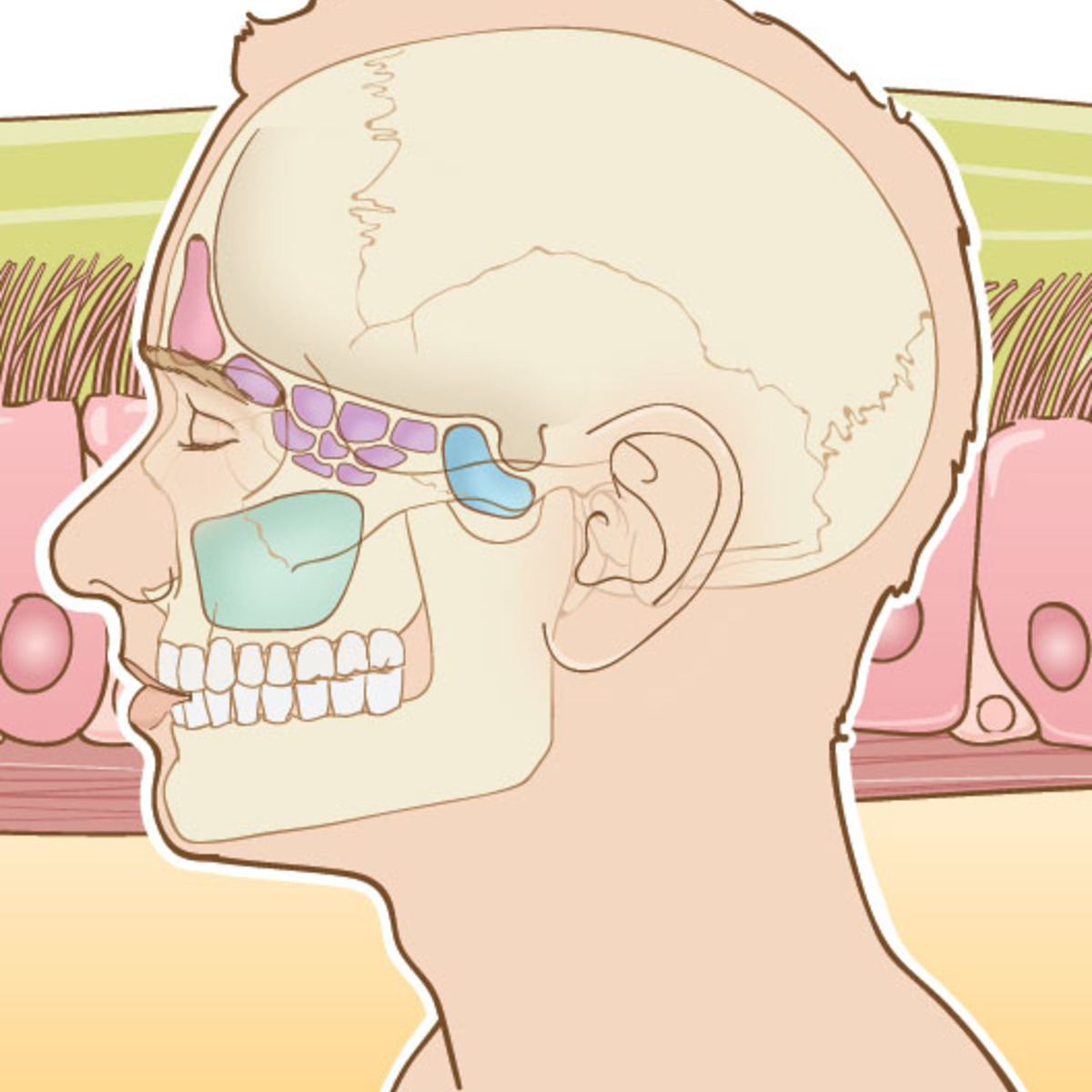 Acute and Chronic Rhinosinusitis: A Comprehensive Review course image