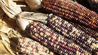 De México al mundo, los ingredientes course image