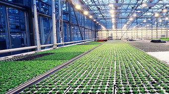 Metodologia de Sistemas Agroindustriais course image