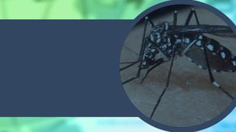 ETV: Paludismo, Dengue y Chikungunya course image