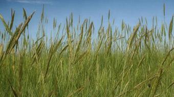 Retos de la Agricultura y la Alimentación en el Siglo XXI course image