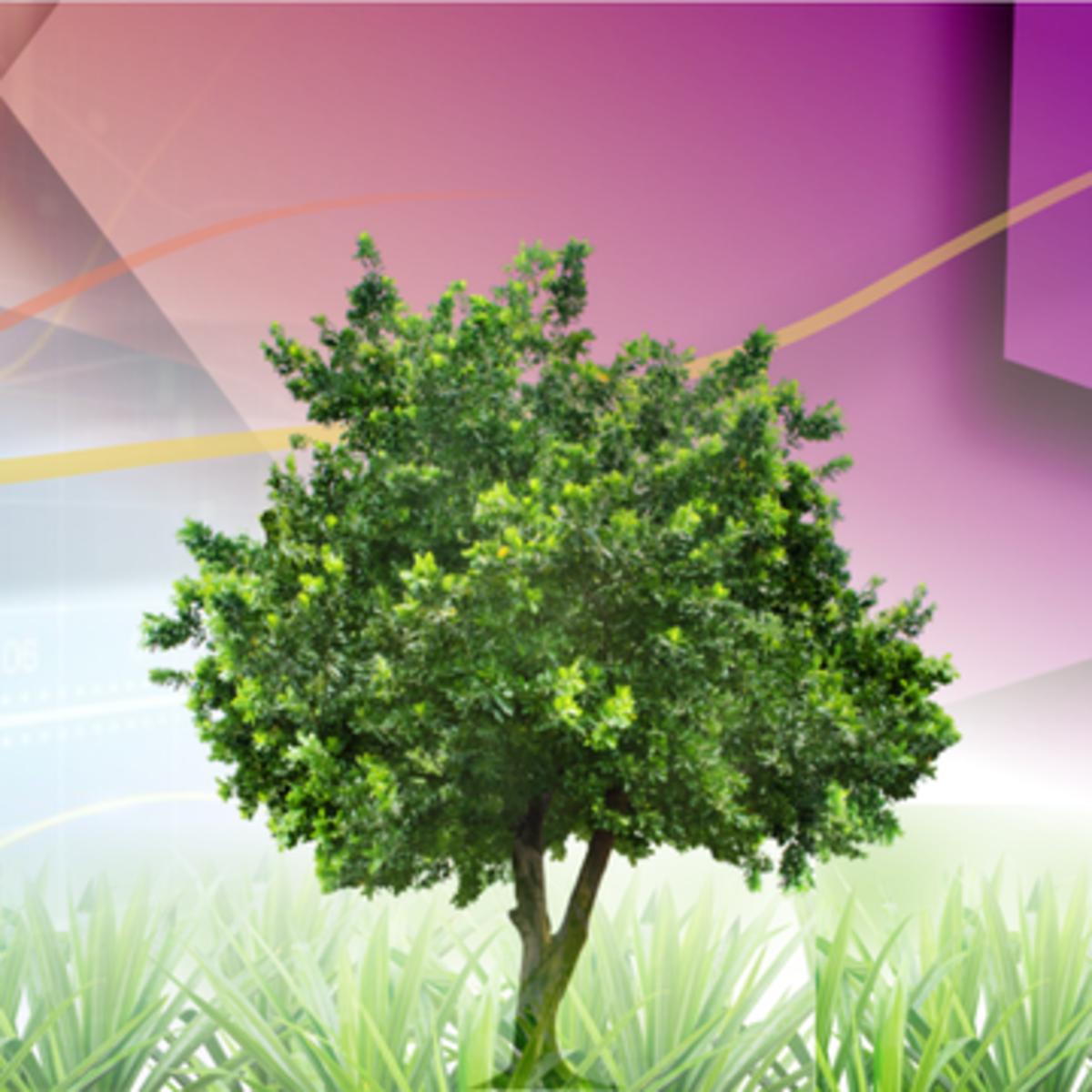 Инвестиционные проекты, слияния и поглощения course image