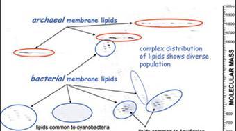 Molecular Biogeochemistry course image