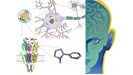 Drugs and the Brain course image