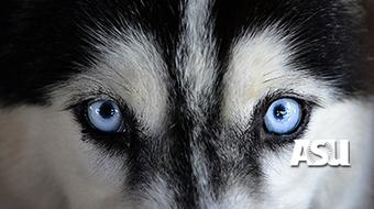 Dog Origins  course image