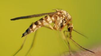 Global Health Initiative - Malaria Awareness course image