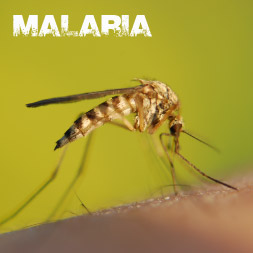 Global Health Initiative - Malaria Awareness course image