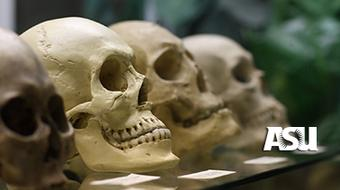 Human Origins course image