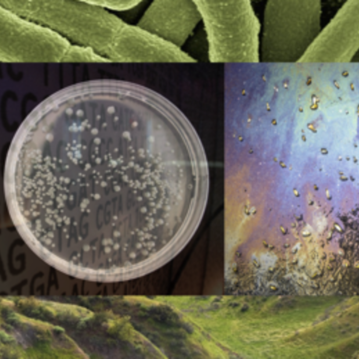 Engineering Life: Synbio, Bioethics & Public Policy course image