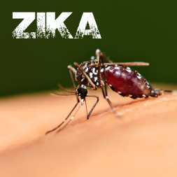 Zika Virus - What You Need To Know course image