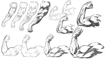How to Draw and Shade Comic Book Style Arms and Anatomy course image