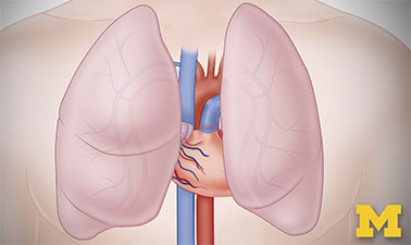 Anatomy: Cardiovascular, Urinary, and Respiratory Systems  course image