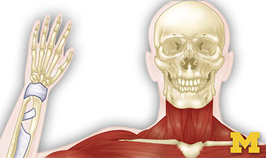 Anatomy: Musculoskeletal and Integumentary Systems course image
