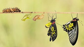 Genética y Evolución: una aproximación cotidiana course image