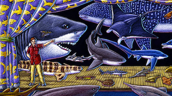 Sharks! Global Biodiversity, Biology, and Conservation course image