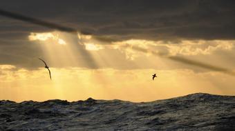 Oceanografía: una clave para entender mejor nuestro mundo course image