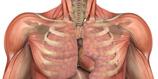 Anatomy & Physiology I course image