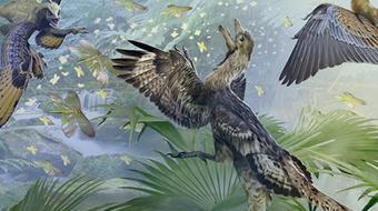 Paleontology: Theropod Dinosaurs and the Origin of Birds course image