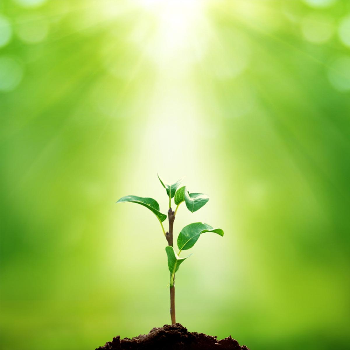 Understanding Plants - Part II: Fundamentals of Plant Biology course image