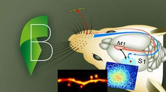 Cellular Mechanisms of Brain Function