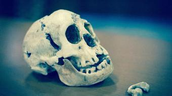Homo Floresiensis Uncovered: The Science of 'the Hobbit' course image