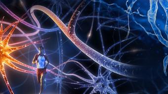 Advanced Neurobiology I course image