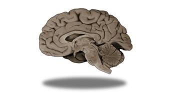 Foundational Neuroscience for Perception and Action course image